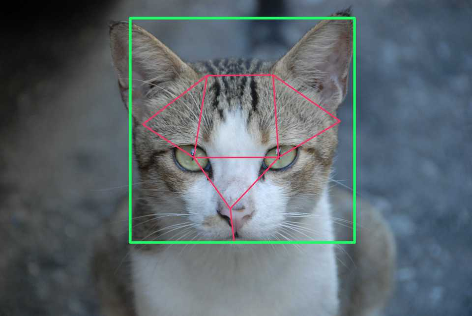 Cat with feature annotation